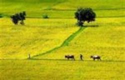 Một cảnh đồng lúa - Hình minh họa (Nguồn Internet, posted by tunhan]
